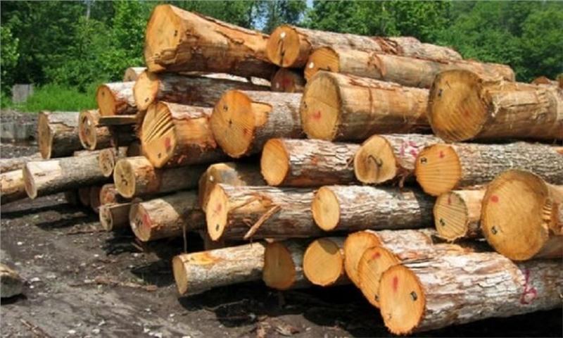 ۸۰ تن چوب قاچاق در زنجان توقیف شده است