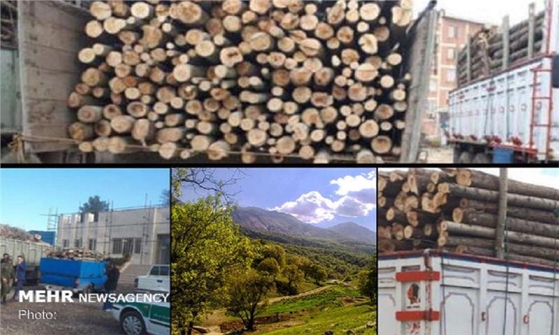 آمار کشف چوب های قاچاق در زنجان افزایش دارد