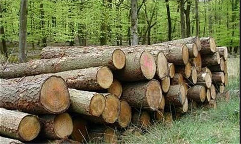 زراعت چوب با استفاده از آبهای غیرمتعارف