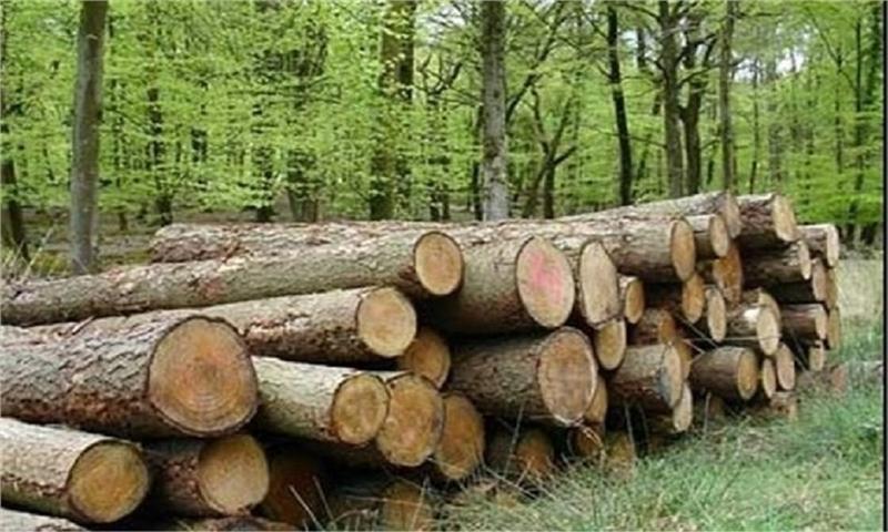 اختصاص۳۰هزار هکتار زمین به زراعت چوب/ واردات چوب با پوست ممنوع شد