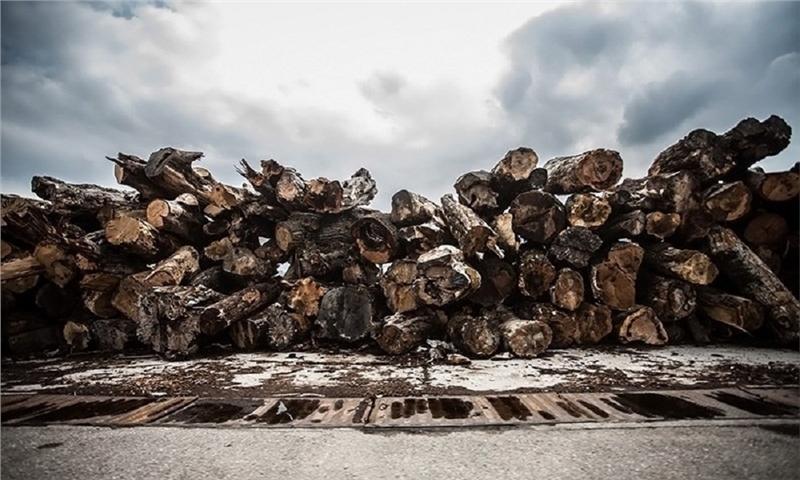 نخستین رویداد ملی ایدههای برتر در صنعت چوب و کاغذ کشور برگزار شد