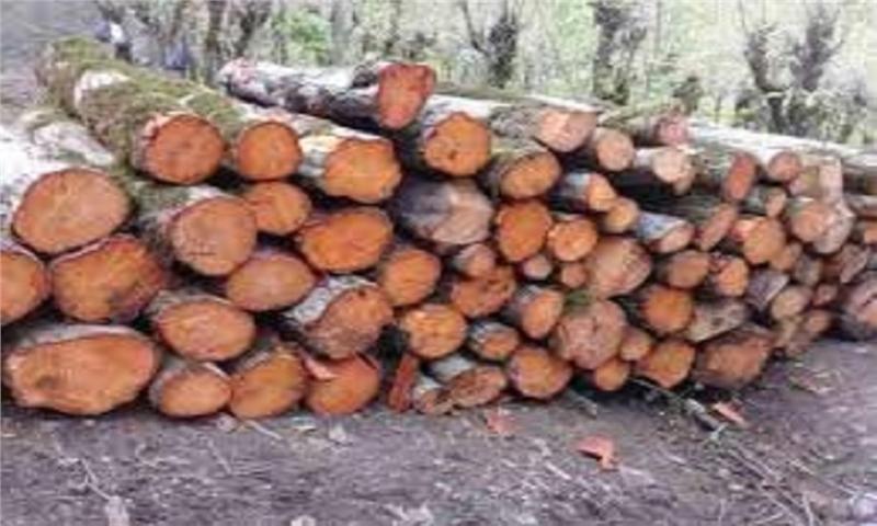 اختصاص درآمد فروش چوب سنواتی به حفاظت از جنگلهای گیلان