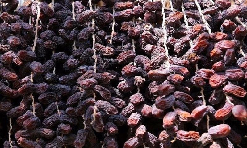 تغییرات اقلیمی علل اصلی ترشیدگی و ریزش خرما در جهرم اعلام شد