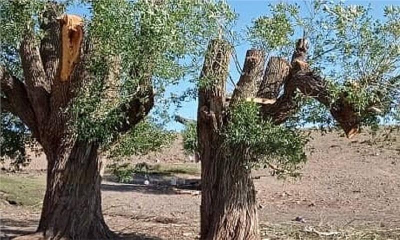 اینجا جنگل نداریم، اما قاچاق چوب، حتما!