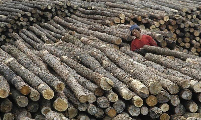 پس از شیوع کرونا چه اتفاقی برای محصولات جنگلی وارداتی به چین افتاده است